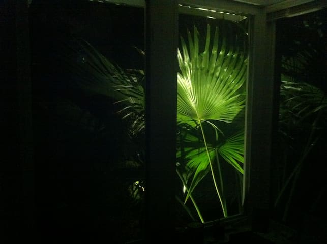 Nightime,  Chinese Fan Palm