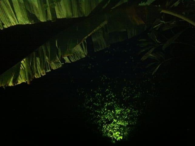 Night view of Banana tree