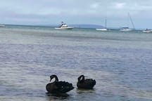 Beautiful Swan Bay.  Picture perfect and different every day.
