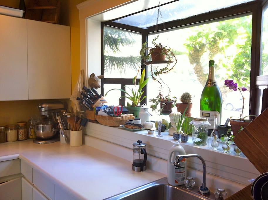 other sunny kitchen window