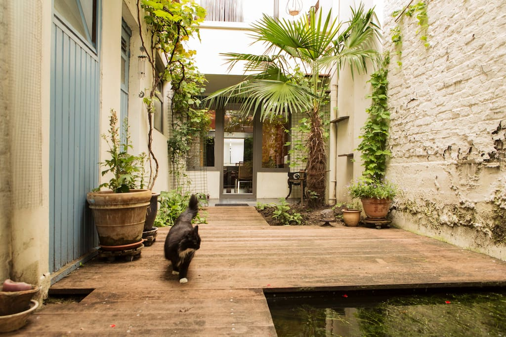 The garden is entirely yours (and the cats')