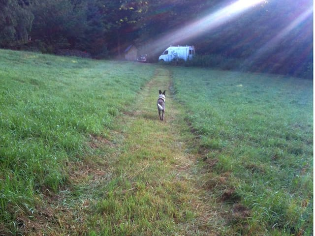 The path to the house - a  2 min walk to your private bathroom. Charlie leads the way.