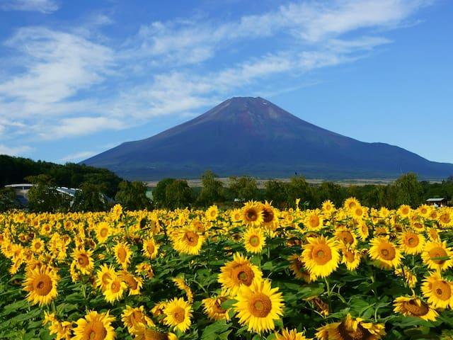 花の都公園 車で約10分 Hananomiyakokouen by car 10min 花之都公园 行车10分钟