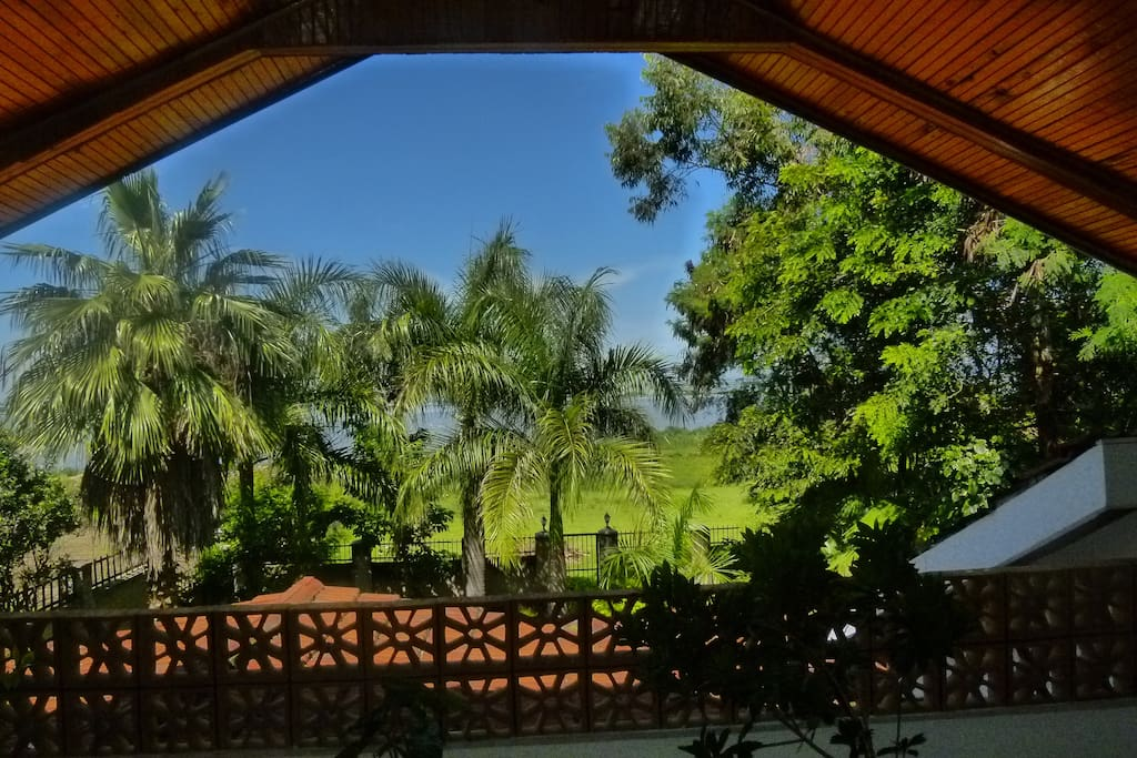 ...and this is the palm-fringed view of the lake from the upper master terrace,...