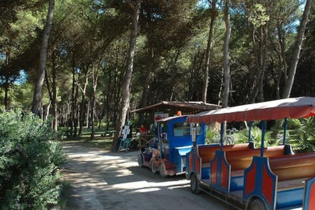 Il trenino che dalle abitazioni, attraversando la pineta, porta i villeggianti in spiaggia.