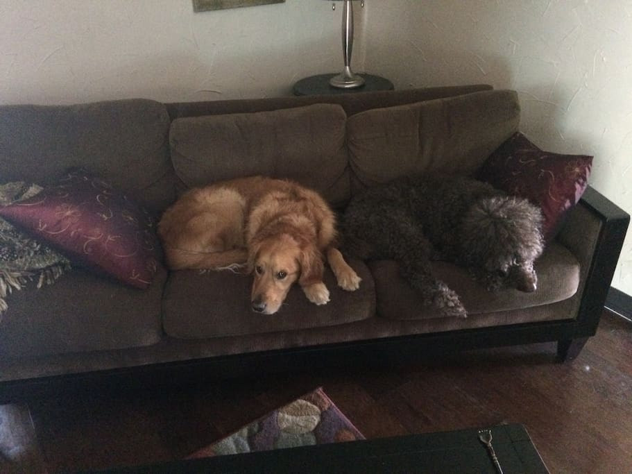2 large friendly dogs live here