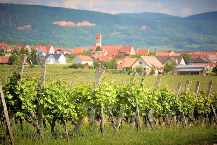 Logement indépendant au cœur du vignoble