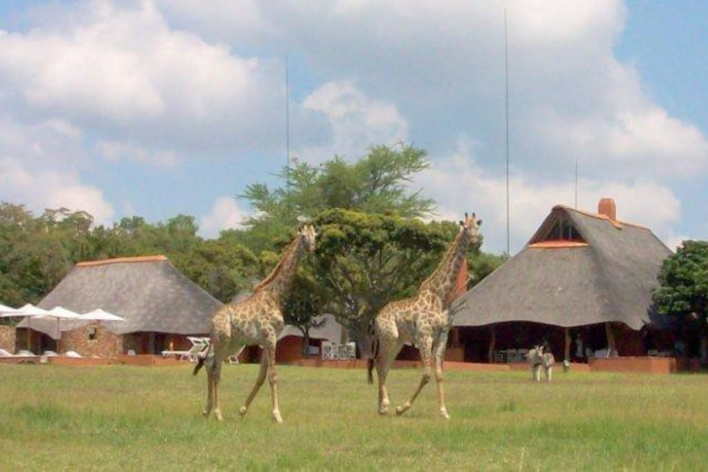 Safari Lodge view