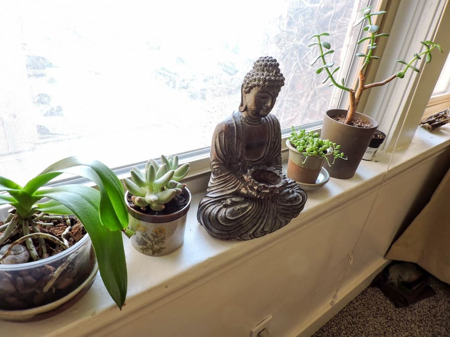 indoor buddha garden.