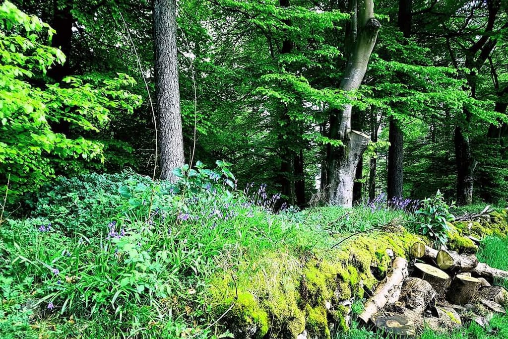 The forest adjacent