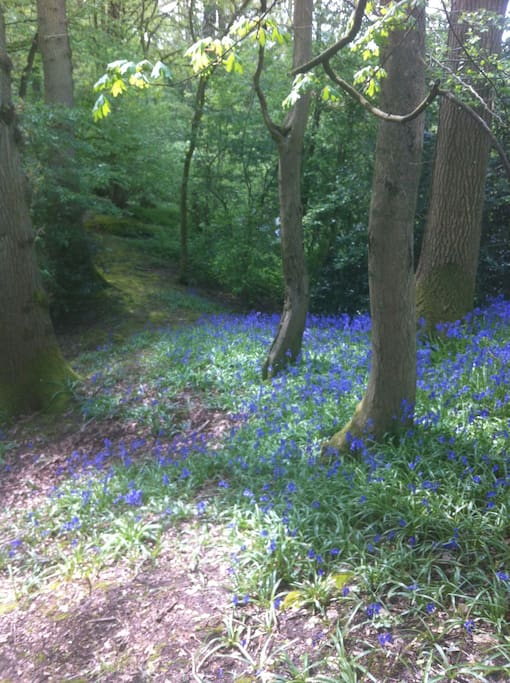 Wander through our own private bluebell wood and orchard.