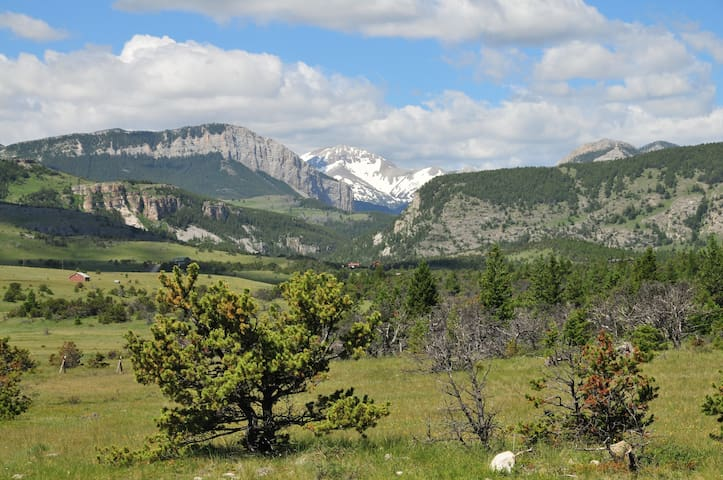 Elk suite: Rocky Mountain Front - Choteau - Dom