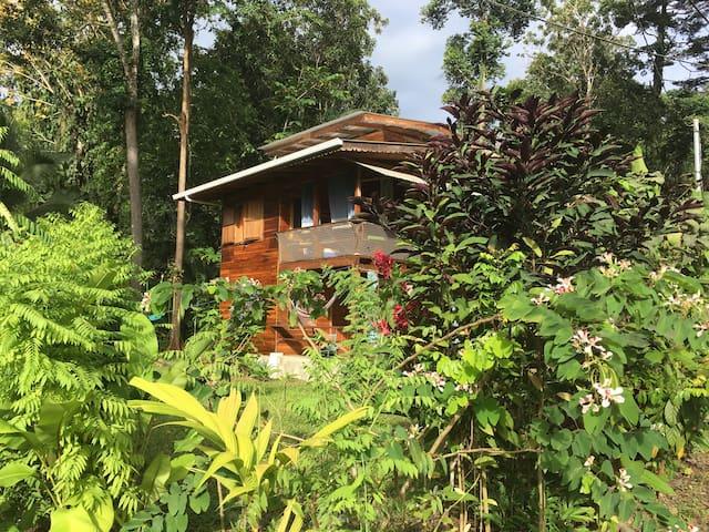 Casa Verano Jungle Beach Apartment