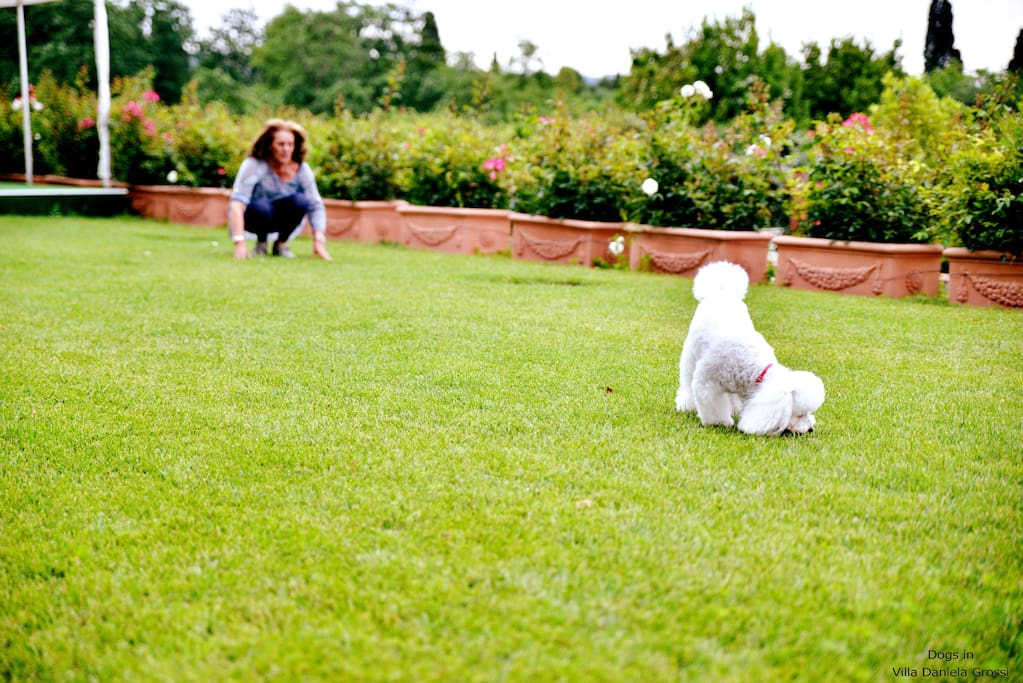 pet friendly environment