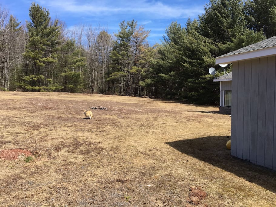 Huge 1 acre field - plus 4 more acres of woods behind house! (Dog belongs to a friend; I do not have pets.)