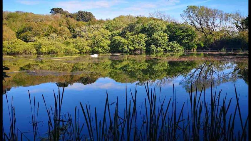 Bosherston Lilly Ponds