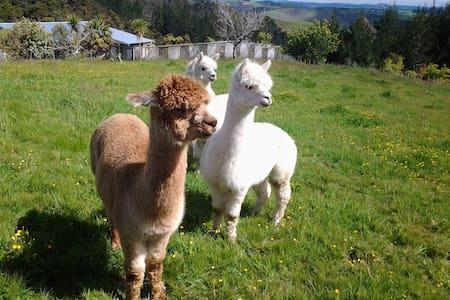 Grant and Sue's Alpacas - Kerikeri