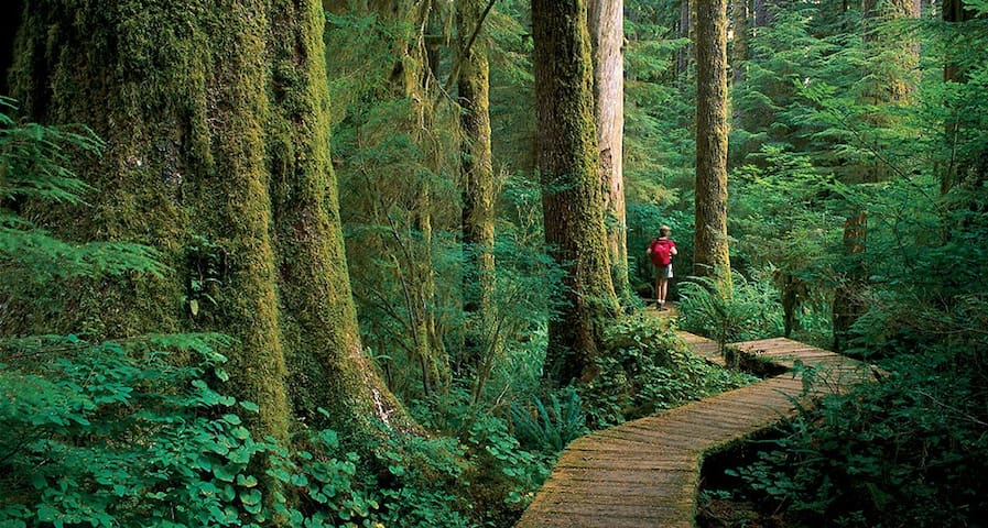 Hiking In Old Growth Forest