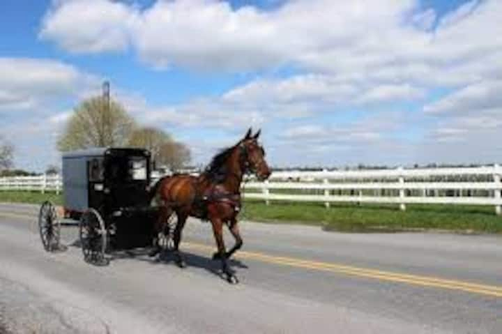 Amish Country Experience in the country side