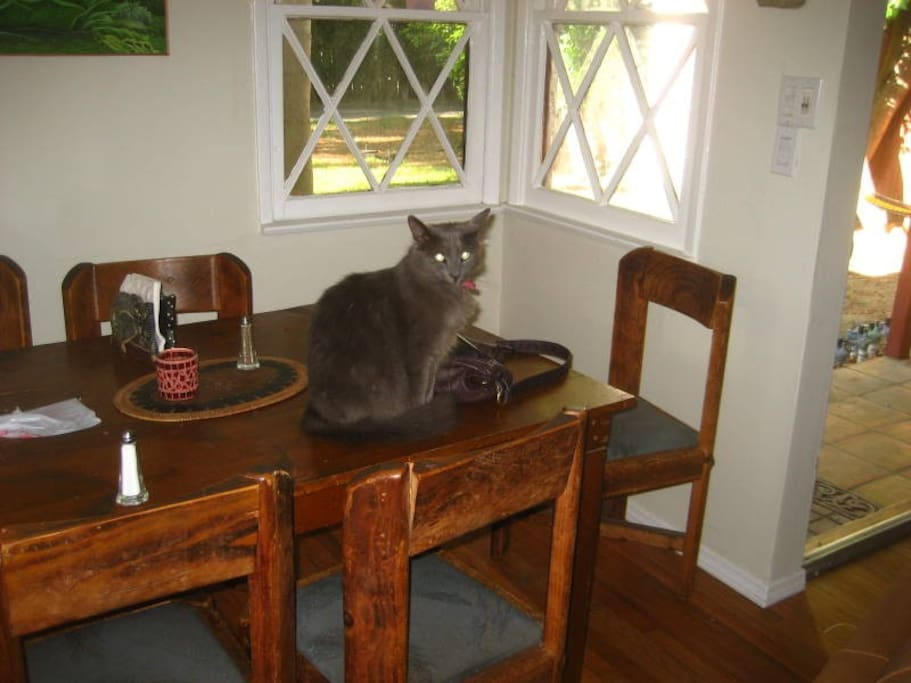 Echo the resident cat posing on a table