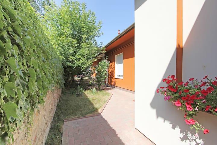 Lovely green garden 4