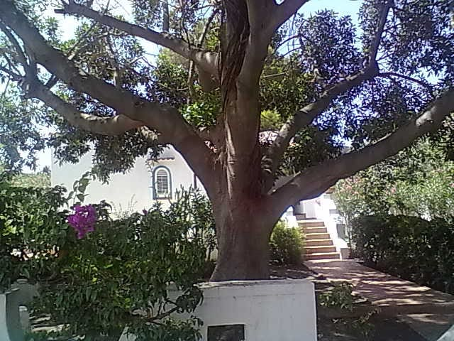 Vulcano FicusBenjamin Eolian Villa - ลิปาริ - วิลล่า