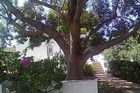 Vulcano FicusBenjamin Eolian Villa - 利帕里 - 别墅