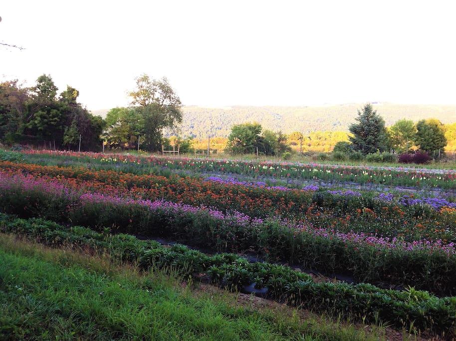 Front flower field