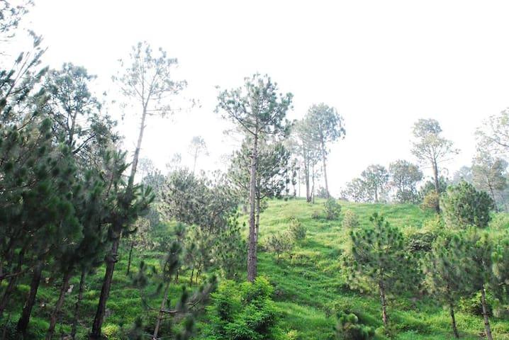 Mingling Pines - Barog - Lakás