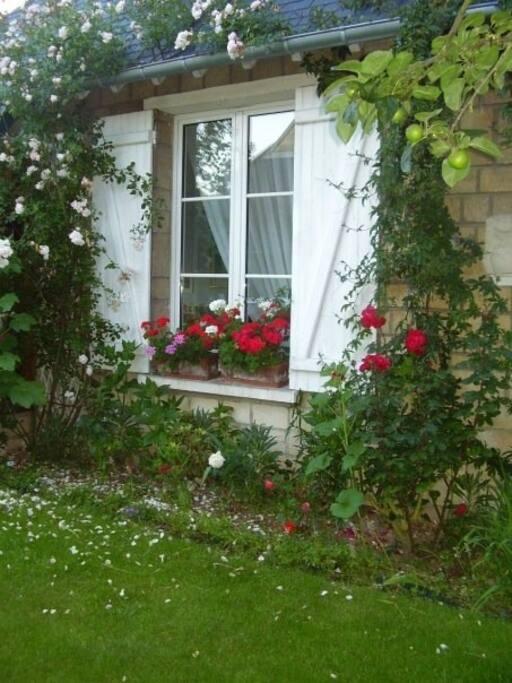 A blossomy garden