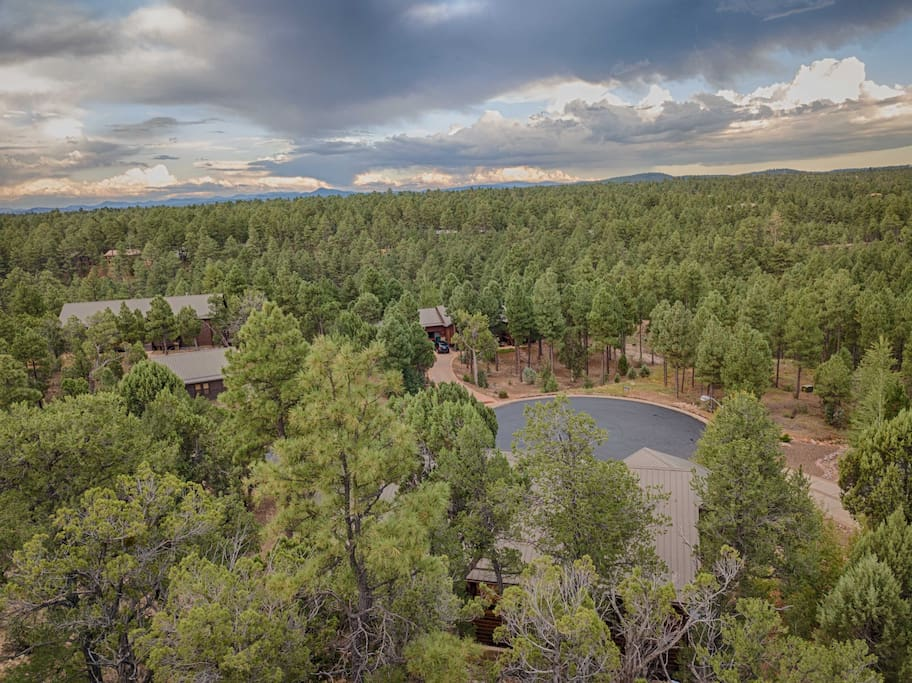 Aerial Forest View From Front