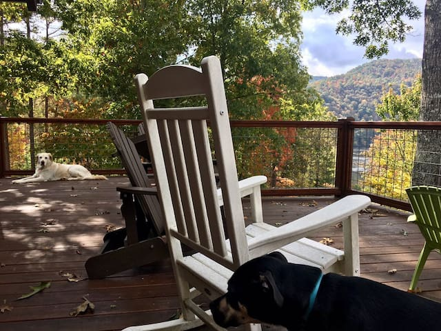 Dogs love the view from the deck