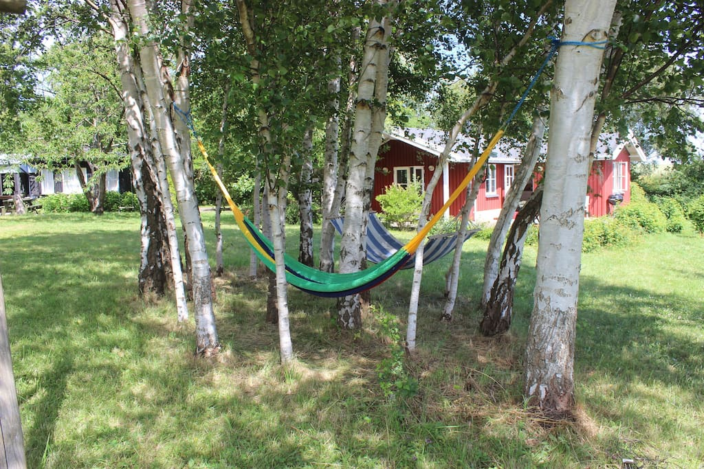 birch garden with hammocks - both houses in the background.