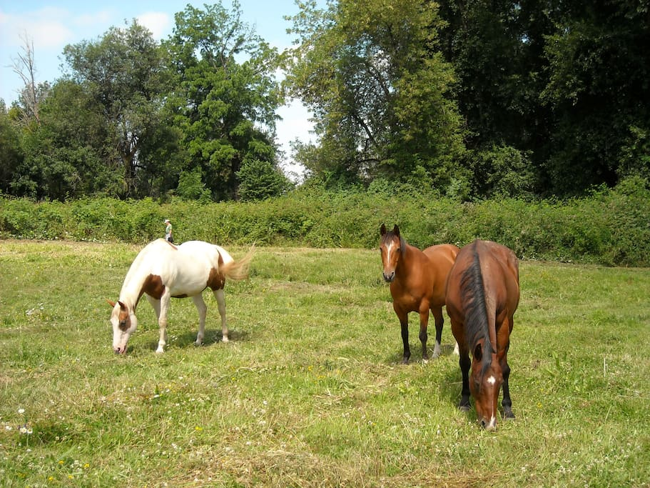 Some of our horses in the pasture by the yurt.