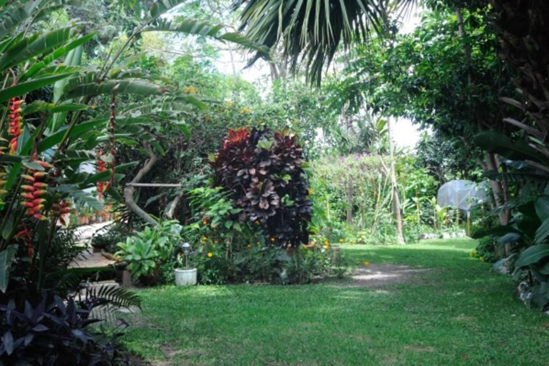 Beautiful luscious garden.