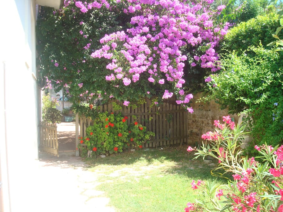 Giardino privato e vialetto di accesso