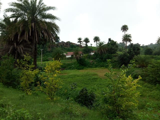 singh home stay 100% organic fields