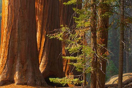 ~ Giant Sequoias, Too ~ 4 BEDS ~ - Bed & Breakfast