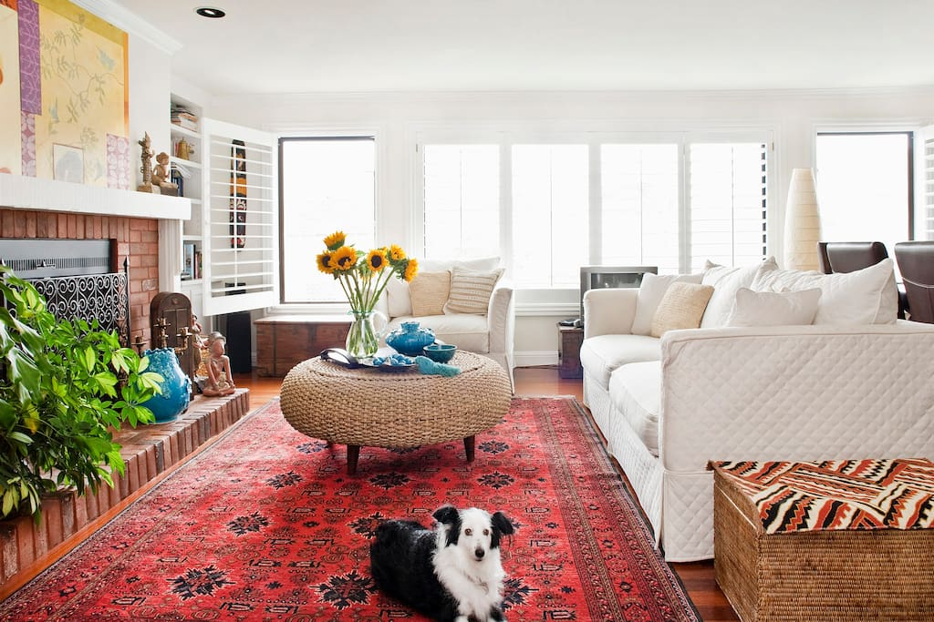 Inviting sunny bright living room with a wonderful companion