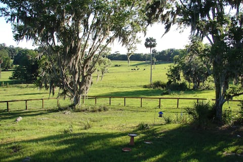A country cottage near Micanopy.
