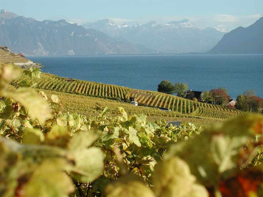Lavaux - Lake of Geneva Region