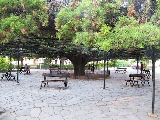 Principe Real garden (historical tree)