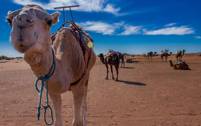 Hostel m'hamid & desert activities
