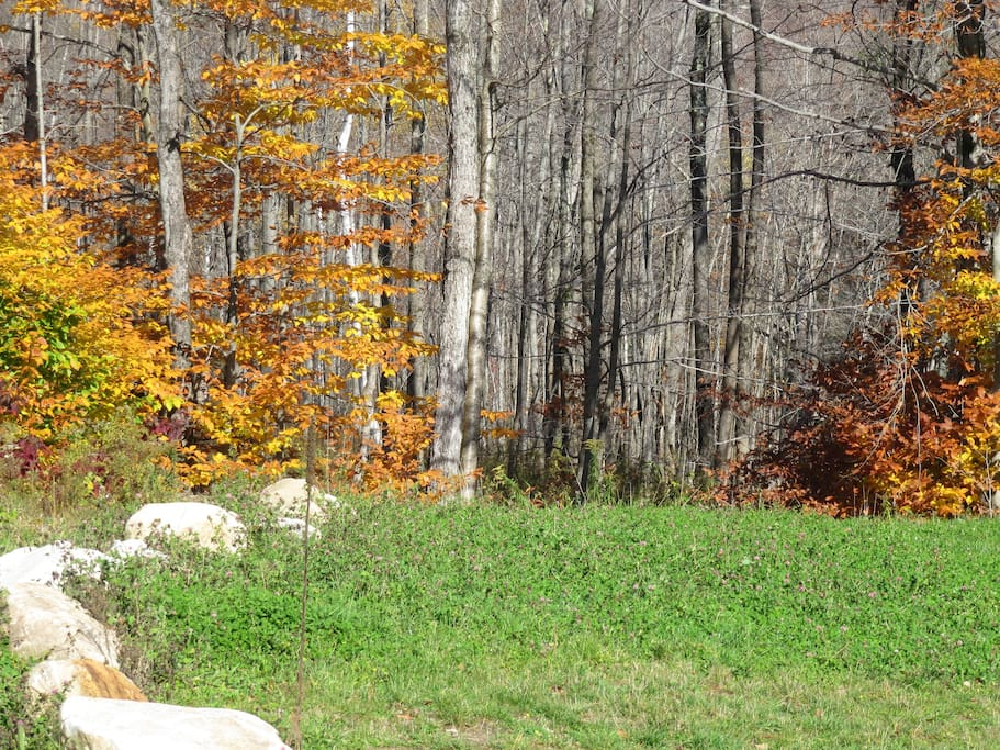 the clearing our house is in during the late part of fall color.