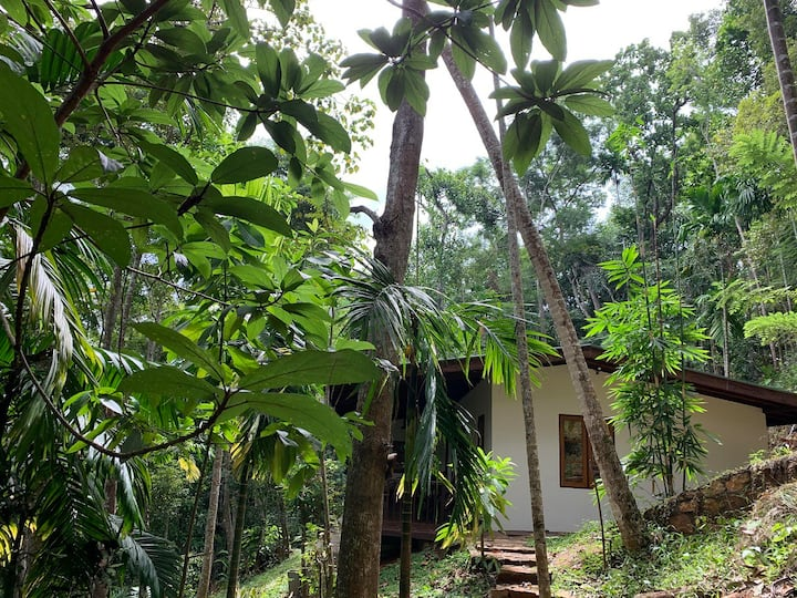 A House in the Jungle
