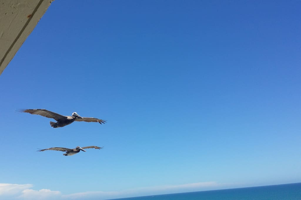 Pelican's at the roof line.