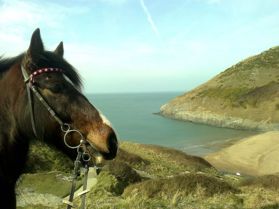 Jess's horse Jack at Mwnt, our local National Trust beach about 3 miles from us on country lanes.