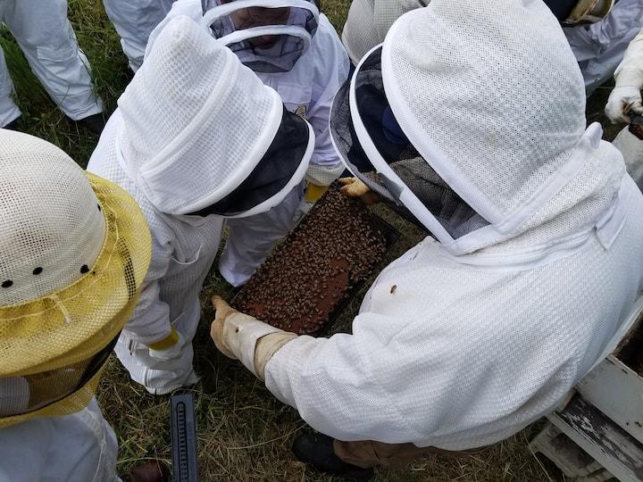 Host Beekeeper Joel inspecting a frame