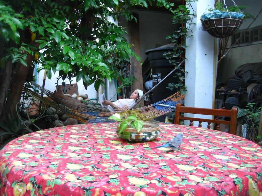 Zona de lectura o descanso en hamacas, a la sombra de un frondoso árbol de fruta estrella. o si prefiere compartir un café o un jugo natural en una mesa en el jardín, en la casa de los anfitriones.