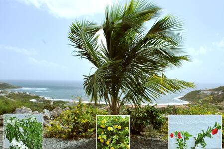Casa Julian Fleur de Mer/ Ocean view /Private Pool